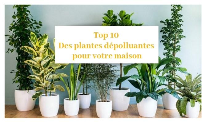 Top 10 Des Plantes Depolluantes Pour Votre Maison Constructeur De Maisons En Saone Et Loire 71 Tradidemeures